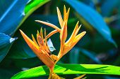 stock photo of bird paradise  - Bird of Paradise flower flower from tropical forest - JPG
