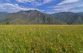 Meadow In The Altai Mountains.