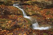 Autumn Stream In The Forest