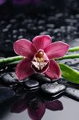 Red orchid flower with bamboo and therapy stones