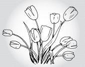 Tulips Hand Drawn