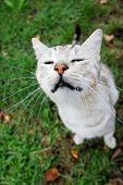 Grey Cat Sitting On Grass
