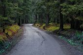 Forest road. Landscape.