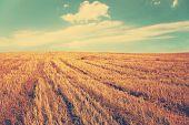 autumn fields, retro film filtered, instagram style