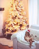 Lovable ginger cat wearing Santa Claus hat sleeping on chair near Christmas tree at home interior