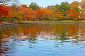 Tidal Basin with trees in autumn foliage in Washington DC.