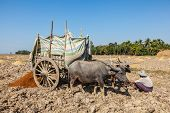 MYANMAR - JANUARY 6, 2014: Unidentified Burmese peasant working in the field with ox cart. Agriculture in Burma is the main industry accounting for 60% of the GDP and employing 65% of the labor force