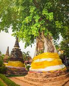 pic of na  - Stupa overgrown by tree in Wat Na Phra Men - JPG