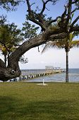 picture of extend  - A well groomed grassy shoreline with a massive tree and an extended pier extending far into the ocean - JPG