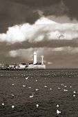 image of water bird  - lighthouse a - JPG