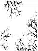 stock photo of nake  - Grunge black silhouettes of naked tree branches frame on white background - JPG