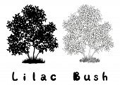 image of lilac bush  - Lilac Bush with Leaves and Grass Black Silhouette - JPG