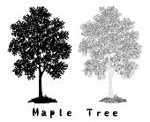 picture of maple tree  - Maple Tree with Leaves and Grass Black Silhouette - JPG