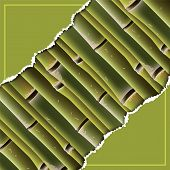 stock photo of cut torn paper  - Bamboo branches under the torn paper - JPG