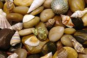 Shells And Rocks