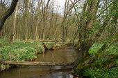 image of brook trout  - Trout brook Rossel in Saxony - JPG