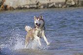 Dog In The Beach
