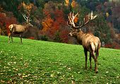 two deers on a colorful background