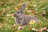 rabbit on autumn background