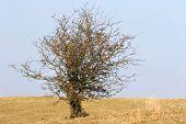 Wizened Tree In Winter