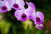 Vibrant purple tropical orchid flower