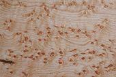 Acer madera-textura
