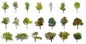 Collections Green Tree Isolated. Green Tree  Isolated On White Background. poster