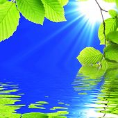 Green Leaf And Water