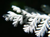 Macro shot of a white leaf