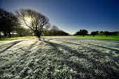 Early morning frost on grassy field in New Zealand