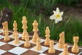 Fragment Of Chess Board With White Chess Pieces In Green Background With Daffodil Flower. Selective  poster