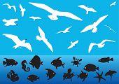 Постер, плакат: Некоторые силуэты полет чайки и морских животных