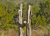 Cedar Fence Post