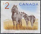 CANADA - CIRCA 2005: A stamp printed in Canada shows two sable island horses circa 2005