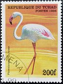 CHAD - CIRCA 1998: A stamp printed in Chad shows phoenicopterus ruber circa 1998