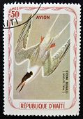 HAITI - CIRCA 1980: A stamp printed in Haiti shows Sterna Dougalli (Roseate tern) circa 1980