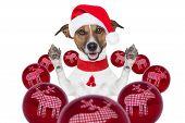 Christmas Dog With Santa Hat And Balls