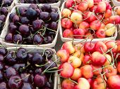 stock photo of bing  - Bing and Rainier cherries at the farmers market