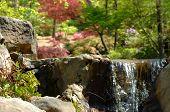 Serenity At Woodland Garden