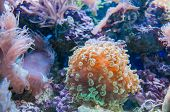 Coral In Aquarium