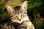 Tom Feral Cat