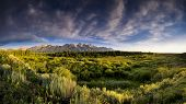 picture of blacktail  - Early summer morning panorama of the Tetons as viewed from Blacktail Ponds Overlook - JPG