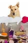 Cute Terrier Sitting In A Bath Full Of Bubbles