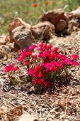 Colourful Red Flowers In A Garden