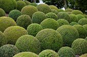 The Boxwood - Green garden balls in France