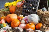 Decoration Of Fresh Different Pumpkin