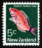 Postage Stamp New Zealand 1970 Scarlet Parrotfish