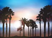 Silhouettes of palm trees against a summer sun sky