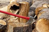 An axe wedged into a tree stump