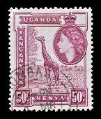 Kenya Uganda Tanganyika 1954